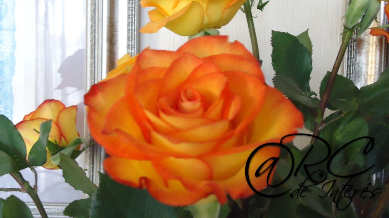 una rosa - María Asturias - 28-05-2013